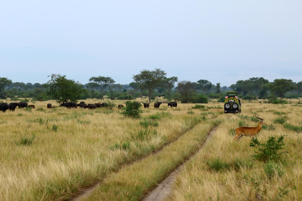 Unlimited Game drives