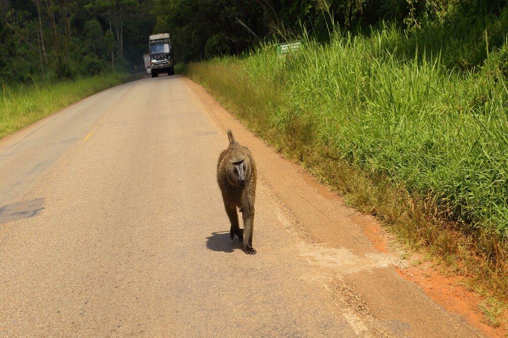 10 day Uganda Safari