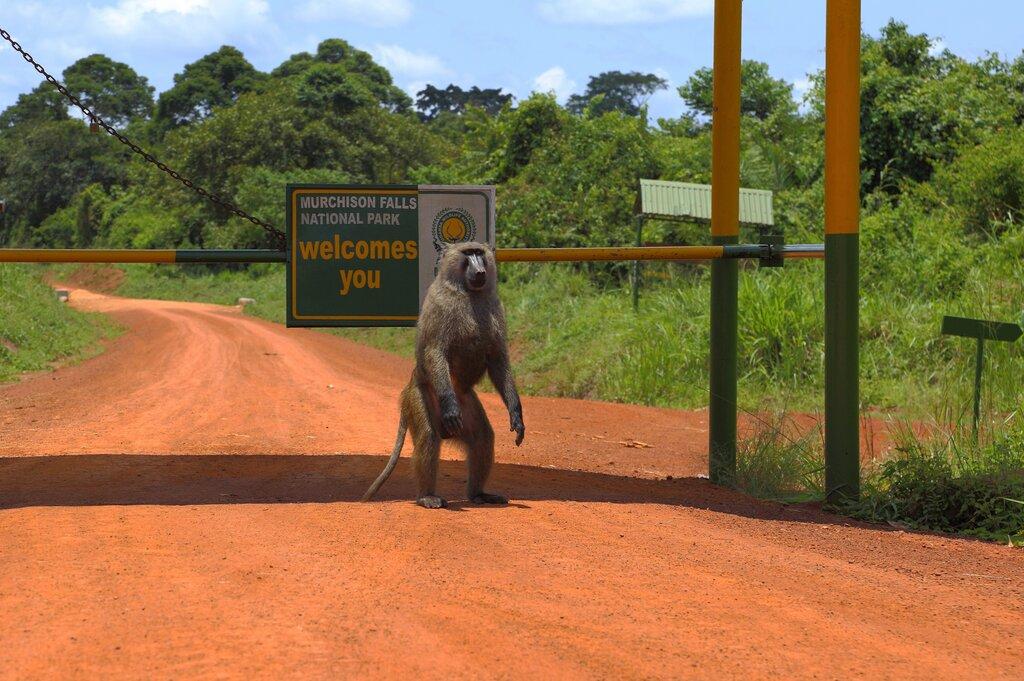 Uganda Trips Murchison Falls