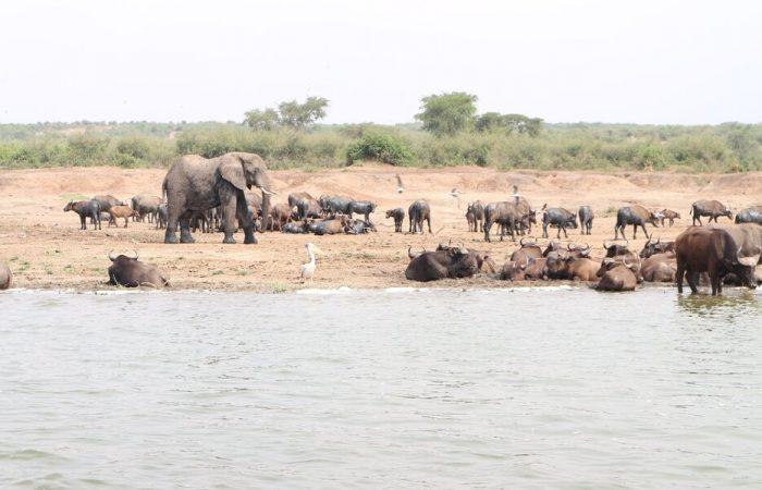 Wildlife Safari Uganda