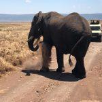 Safari Tour in Tanzania