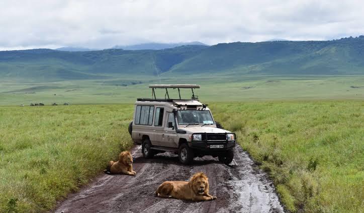 Kenya Safaris and Gorillas